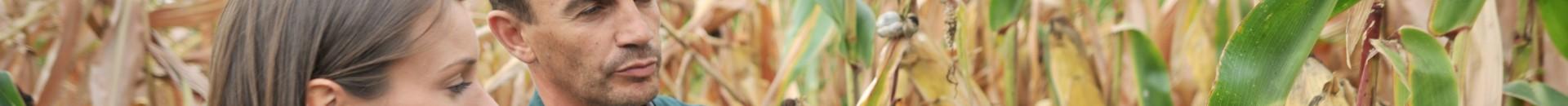 aurea conseil agronomique